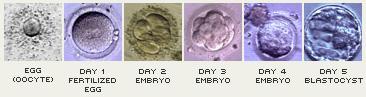 blastocyst_steps